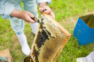 美甘養蜂園について