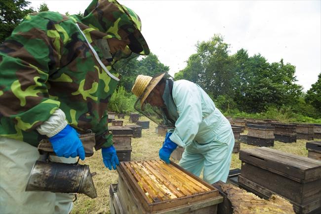 養蜂の違い