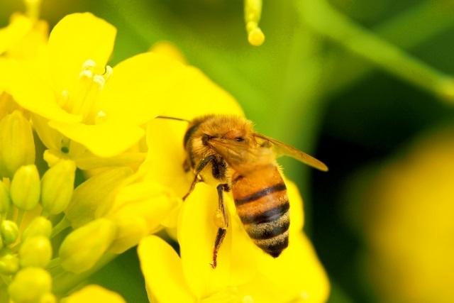 純粋のはちみつ(国産)を扱う【美甘養蜂園】~大自然の恵みを堪能しませんか?~